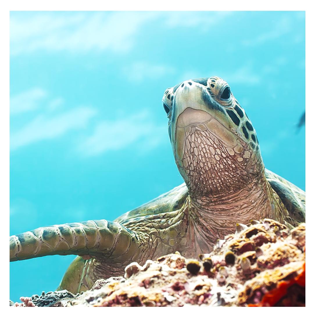 world_turtle_day